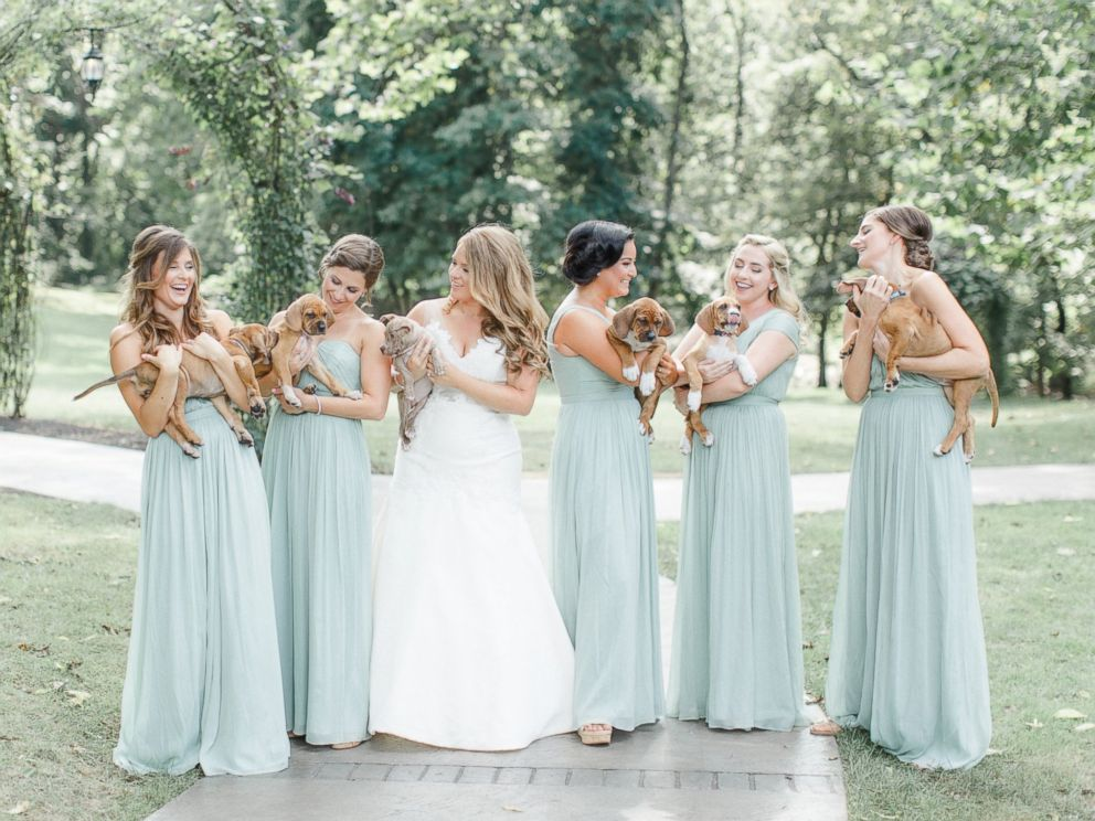 PHOTO: Puppies add a paw-dorable touch to Pennsylvania couples magical wedding.