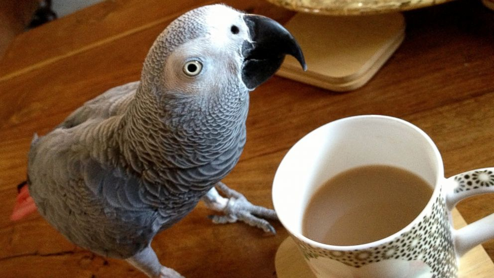 JoeJoe the parrot has been missing for 4 weeks now.