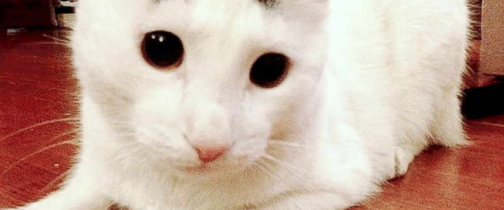 PHOTO: Sam the cat has features that look like eyebrows.