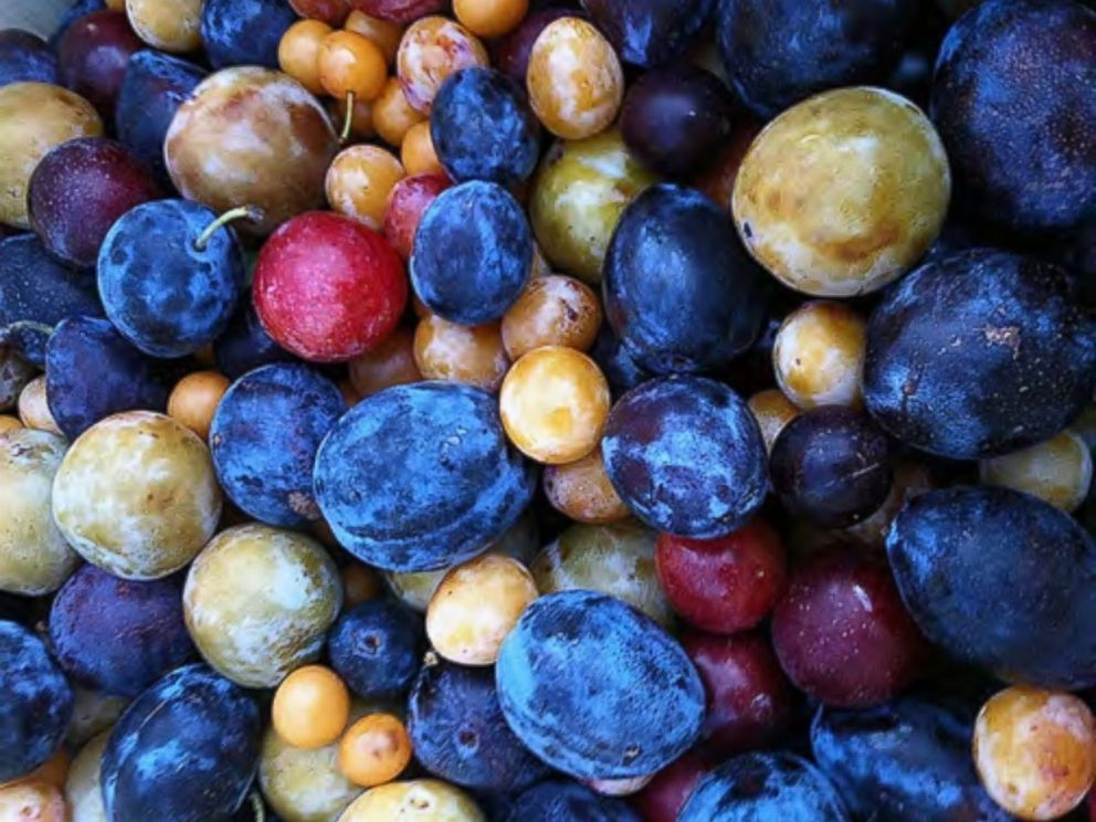 PHOTO: A sampling of the stone fruit varieties than can be grown all on one tree.