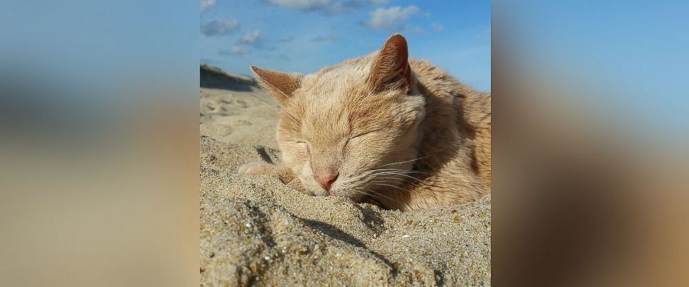 PHOTO: Tigger, a 21-year-old senior domestic cat, is living out his final days with a bucket list adventure.