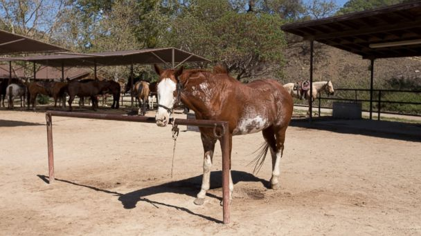 PHOTO: Alisal Guest Ranch & Resort, California