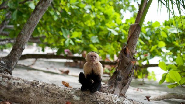 PHOTO: Arenas Del Mar Beach And Nature Resort, Costa Rica