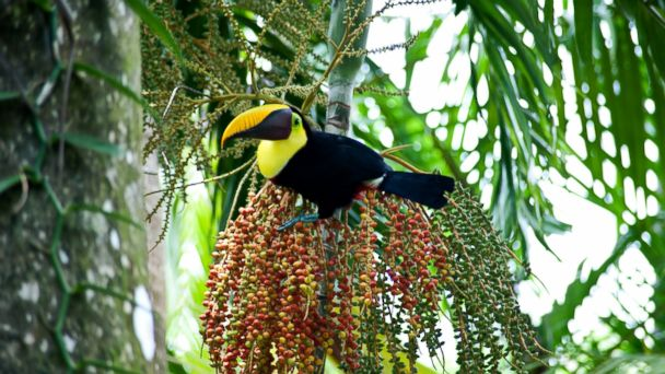 PHOTO: Lapa Rios Ecolodge & Wildlife Reserve, Costa Rica