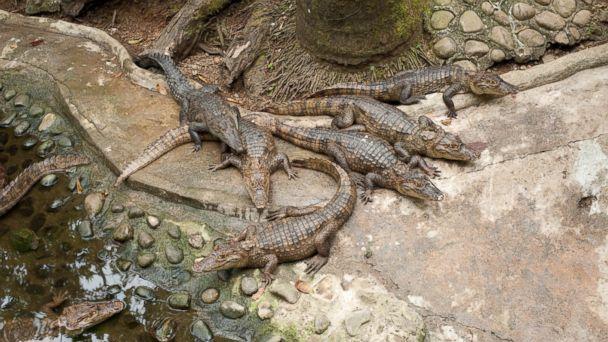 PHOTO: Si Como No Resort, Spa and Wildlife Refuge, Costa Rica