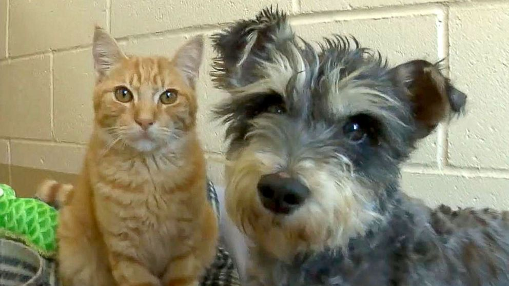 Sell Car Online >> Meet Romeo the Cat and Juliet the Dog, Star-Crossed Lovers ...