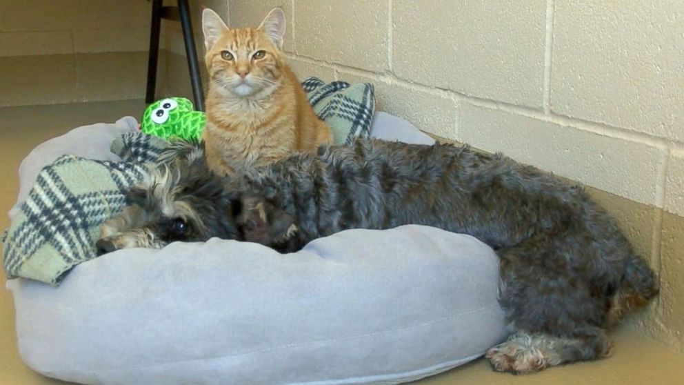 "The Chula Vista Animal Care Facility in California said a cat named Romeo and a dog named Juliet who came the their shelter on Sept. 29, 2016, are ""an inseparable pair."" Credit: KGTV"