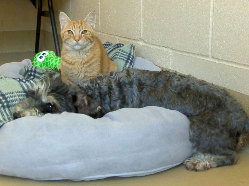 PHOTO: The Chula Vista Animal Care Facility in California said a cat named Romeo and a dog named Juliet who came the their shelter on Sept. 29, 2016, are an inseparable pair.