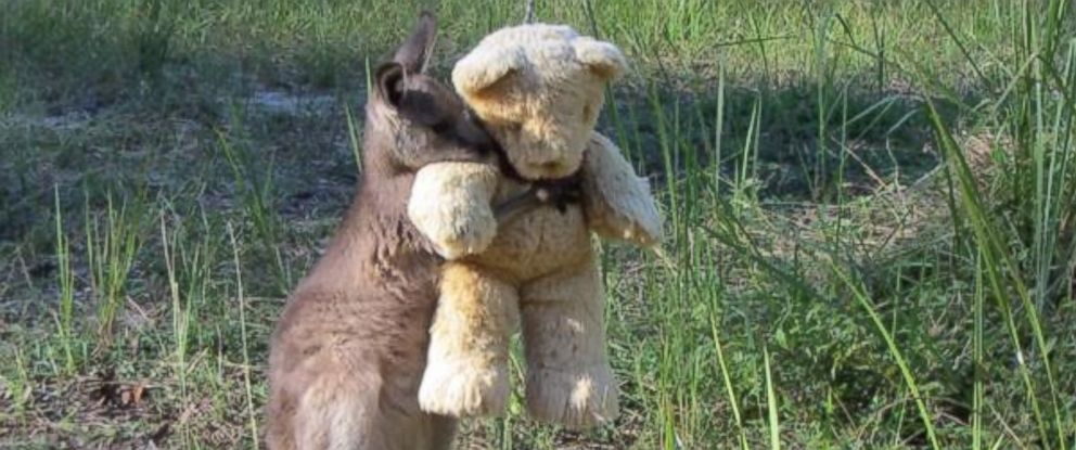 PHOTO: Orphaned Kangaroo Lives Hoppily Ever After With Teddy Bear Best Friend