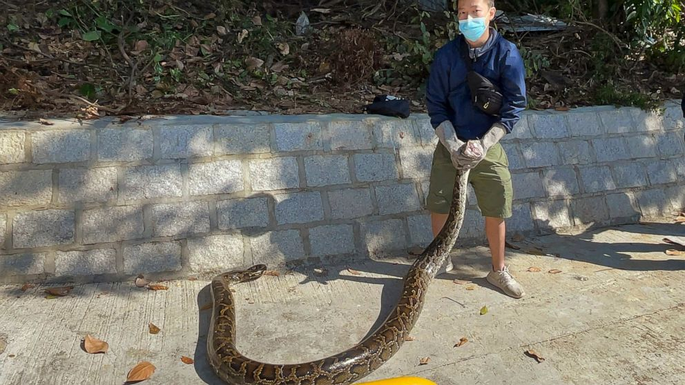 No Snake Soup For Hong Kong S Young Snake Catcher Abc News