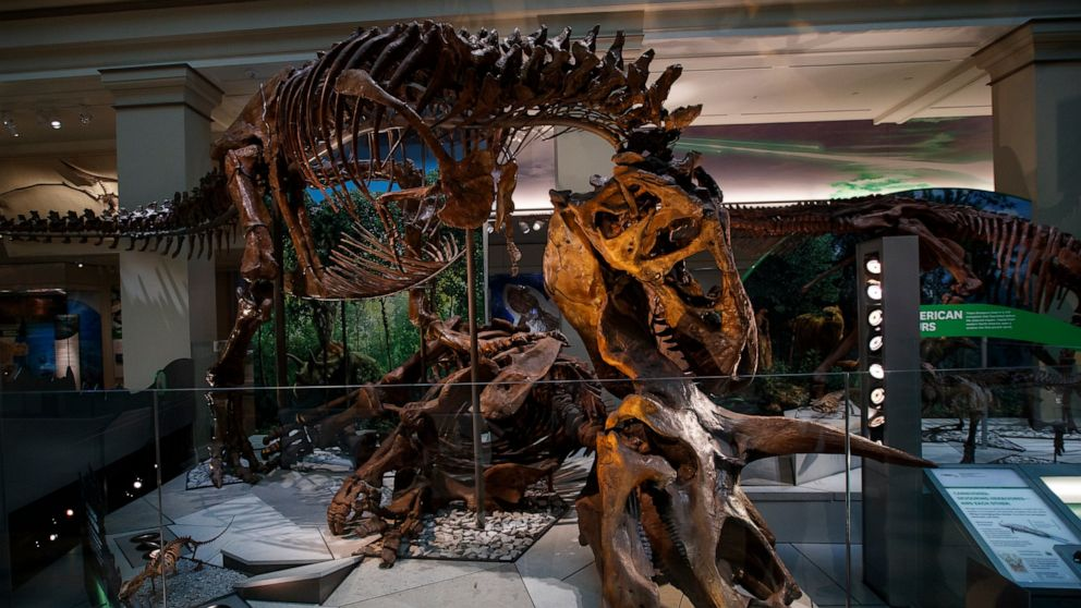 Meet the Museum of Natural History's newest guest: a T. rex