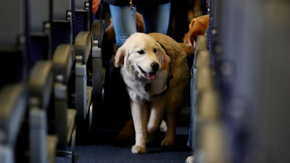 US lays out enforcement priorities for animals on planes