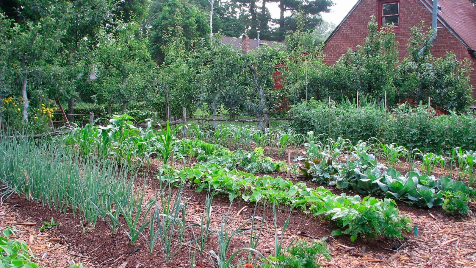 Starting a vegetable garden the basics   ABC News