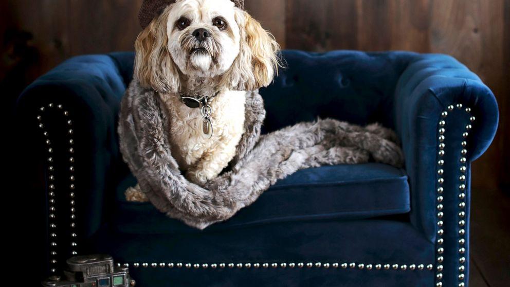 Tremendous The Latest In Pet Furniture Pieces That Fit A Homes Decor Inzonedesignstudio Interior Chair Design Inzonedesignstudiocom