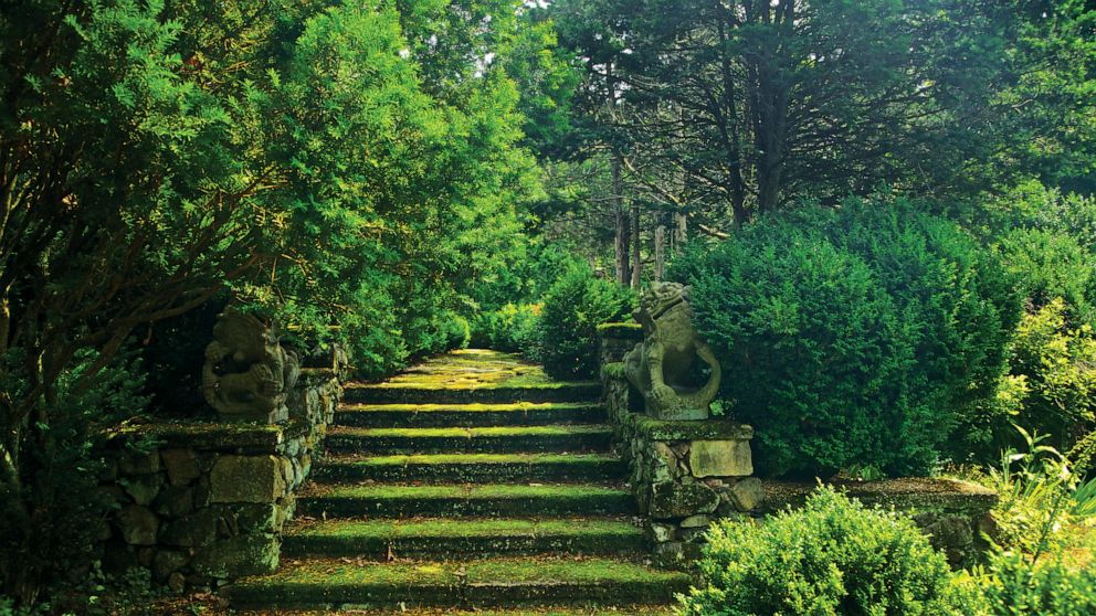 Wild Looking And Sustainable Is The Trend In Garden Design Abc News