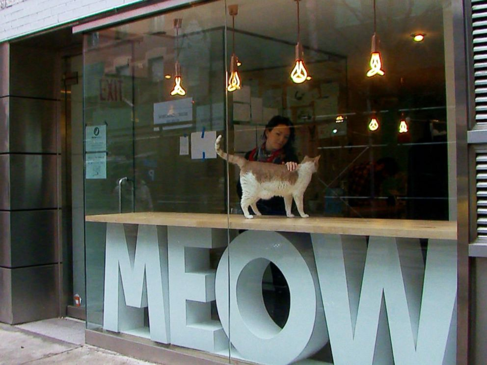 PHOTO: Meow Parlour in New York City, seen here on March 27, 2015, houses cats for adoptions.