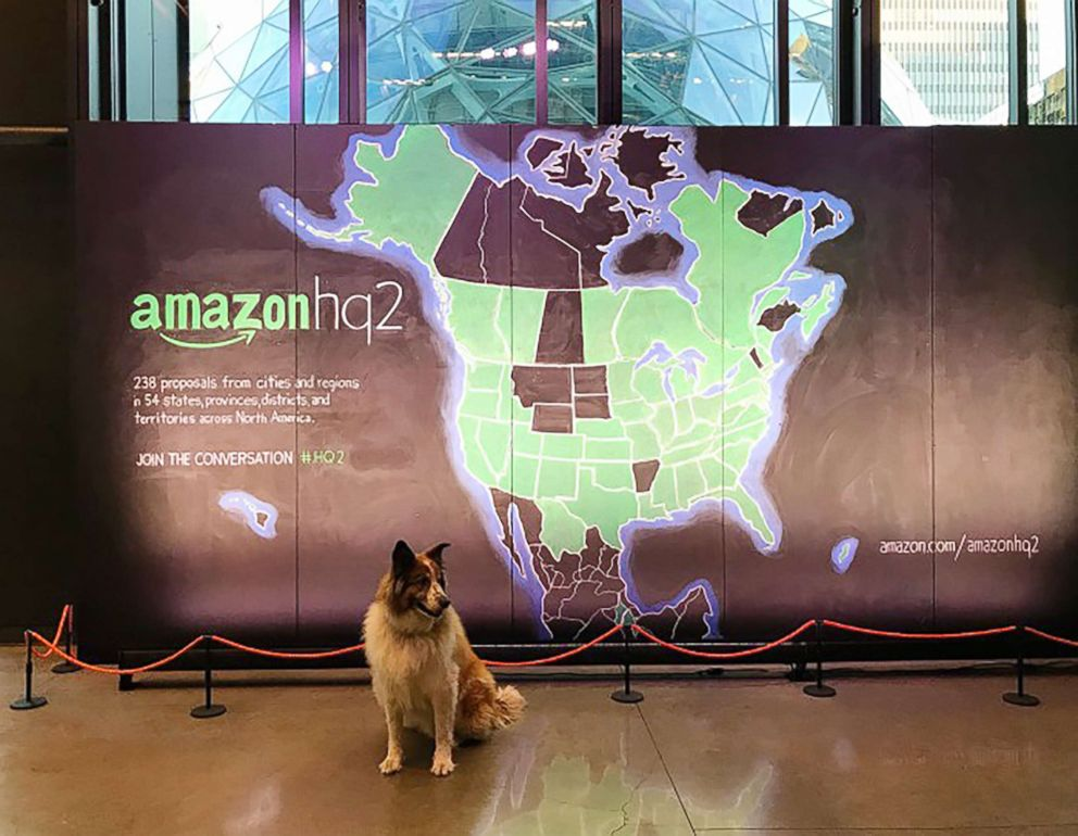 PHOTO: As many as 6,000 dogs share workspace with Amazon employees at the company?s Seattle headquarters.