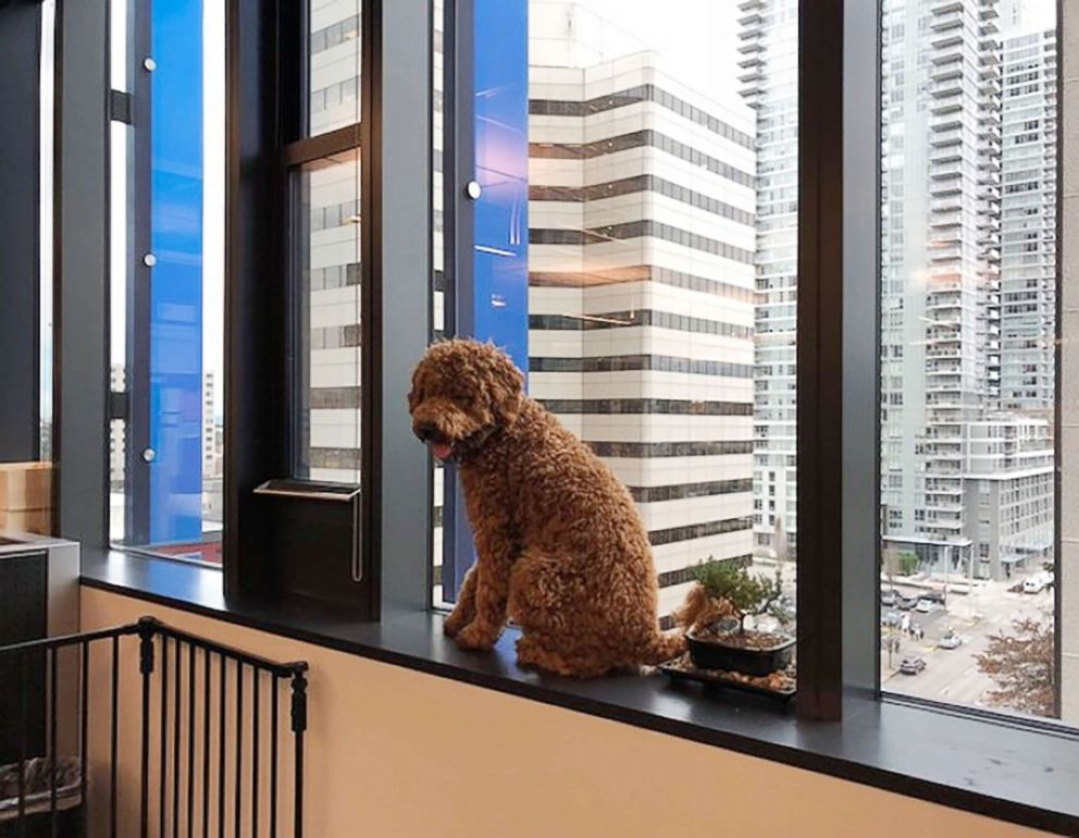 AmazonDogs and employees work side-by-side at Amazon headquarters
