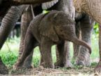 PHOTO: Baby elephant makes its debut