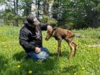 Baby moose rescued in wild