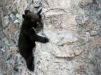 Baby bear hangs out