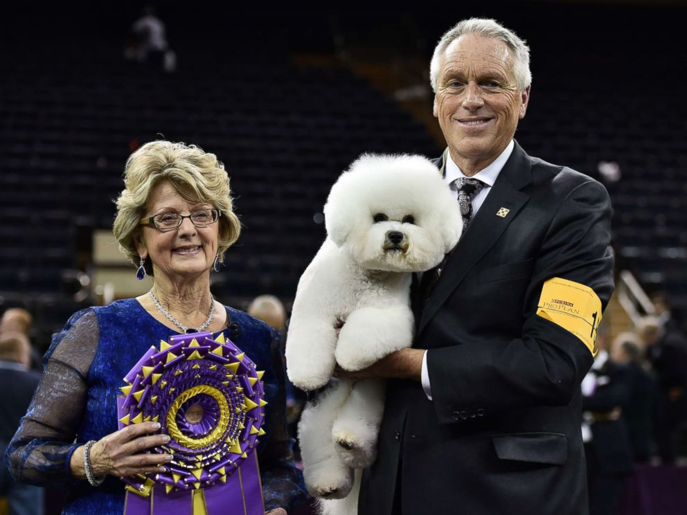 PHOTO: Flynn, a Bichon Frise, along with handler Bill McFadden (R) and judge Betty-Anne Stenmark (L) pose for pictures after winning the Best In Show at the 2018 Westminster Kennel Club Dog Show at Madison Square Garden, in New York City, Feb. 13, 2018.