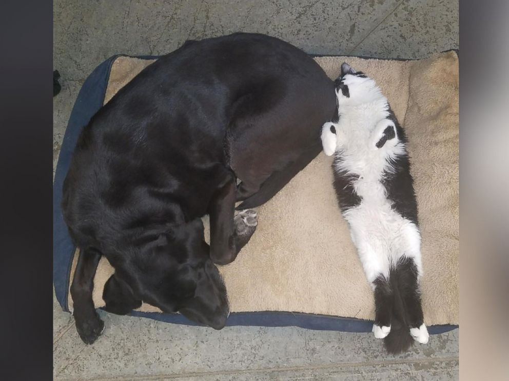 PHOTO: The staff at Support Dogs, Inc. calls DOG the heat seeker because he loves to snuggle with the dogs on their beds.