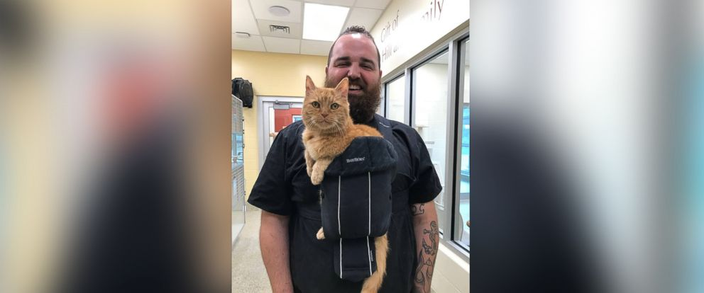 PHOTO: Dougie, a 15-year-old feline, was adopted on Sept. 16 from Animal Refuge League of Greater Portland in Portland, Maine, after a photo of him in a baby carrier went viral.