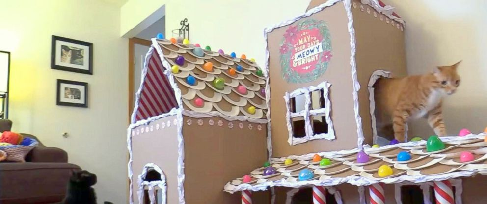 """PHOTO: The final cat-friendly """"gingerbread"""" house on display."""