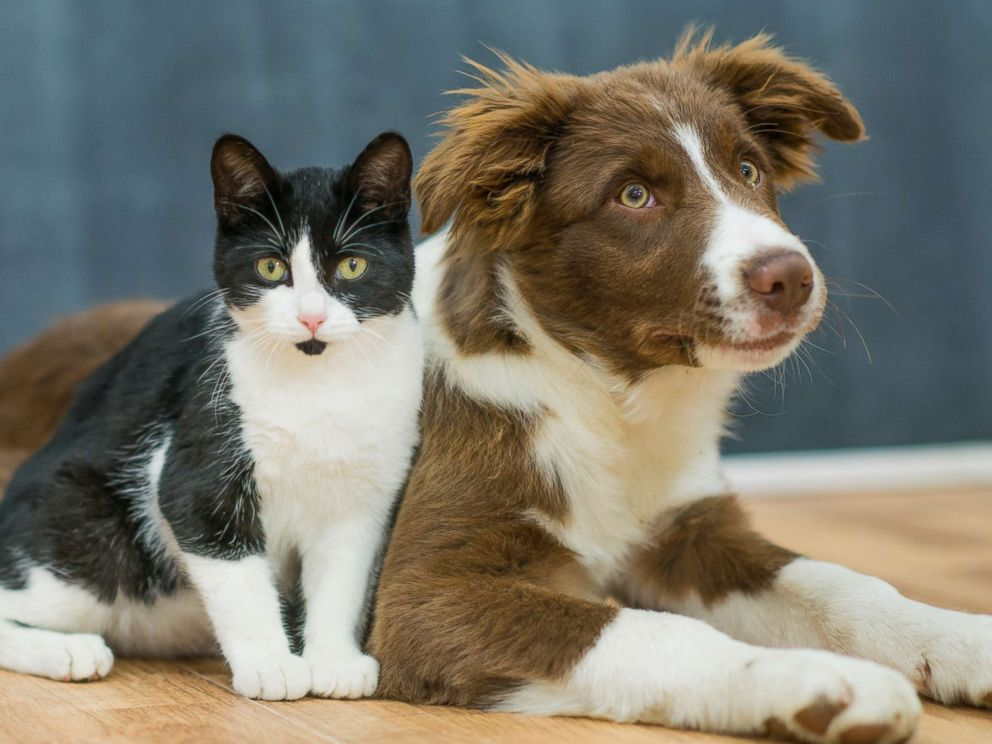 Which Pets Are Smarter Dogs Or Cats