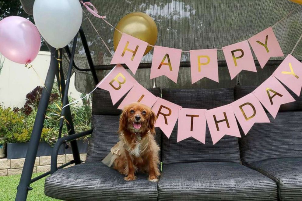 Woman Throws Full Blown 1st Birthday Party For Her Beloved Dog Abc