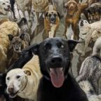 Dogs at a dog day care in Cincinnati pose for a group photo.