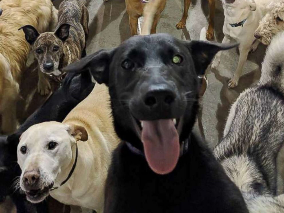 PHOTO: Dogs at a dog day care in Cincinnati pose for a group photo.