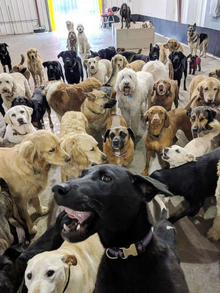 PHOTO: Dogs at a dog day care in Cincinnat look at the camera.