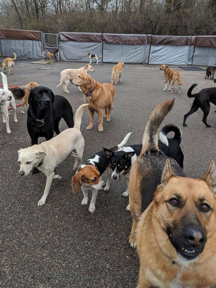 PHOTO: Dogs play at a dog day care in Cincinnati.