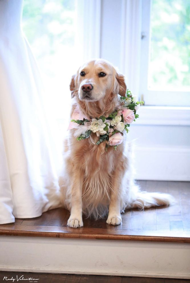 This four-legged flower girl, Norah, stole the show at Briana Schaefer's Nov. 4, 2017 wedding in Chicago.