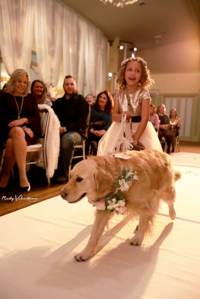 Norah the golden retriever stole the show as one of the flower girls at her owner's Nov. 4, 2017 wedding.
