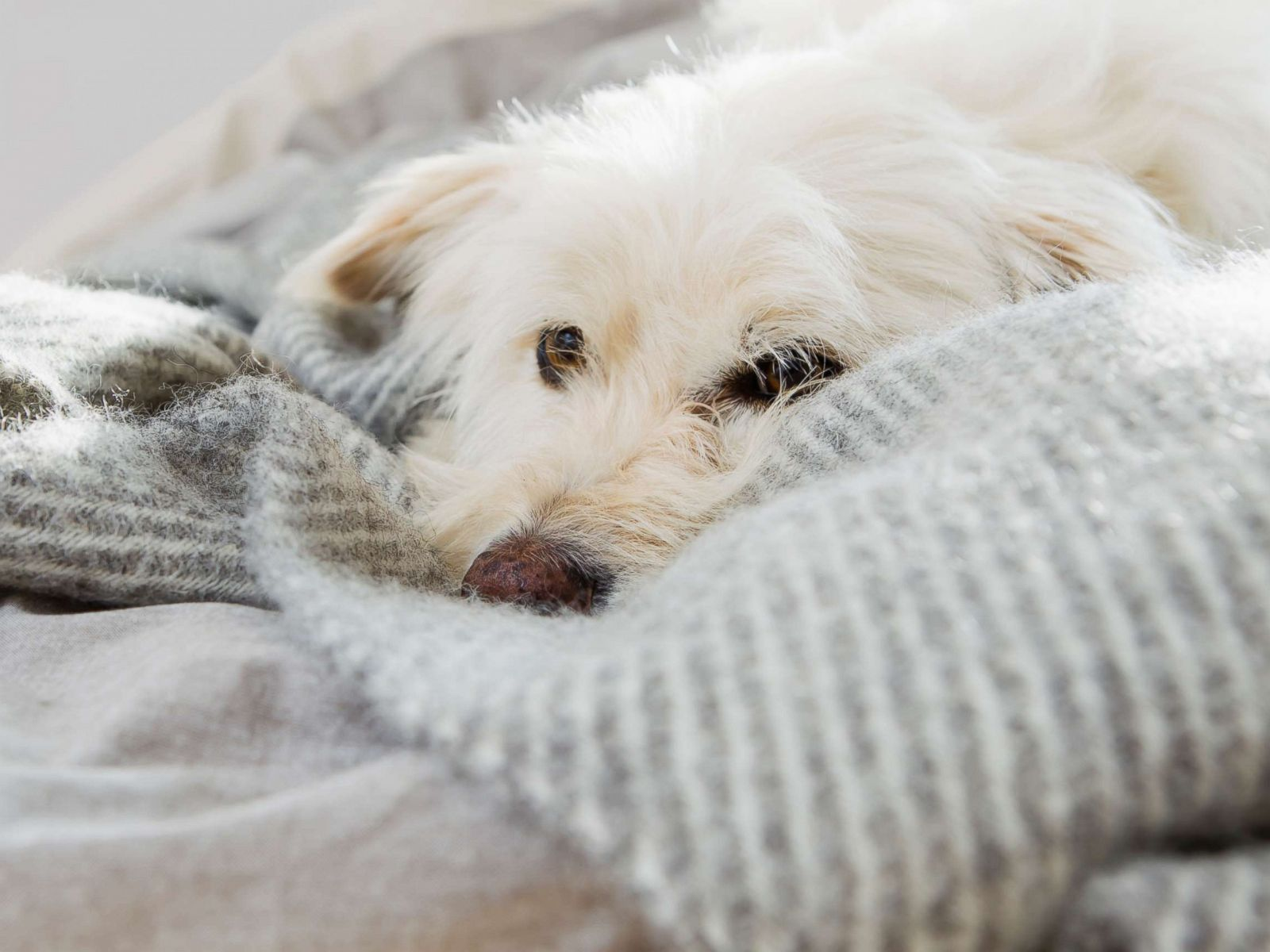 Yes, your dog can get the flu too: How to protect man's best