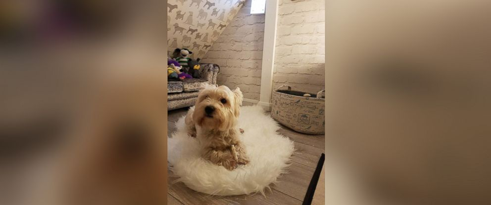 PHOTO: Michael McGowan created a glamorous dog den for his 3-year-old West Highland White Terrier named Molly.