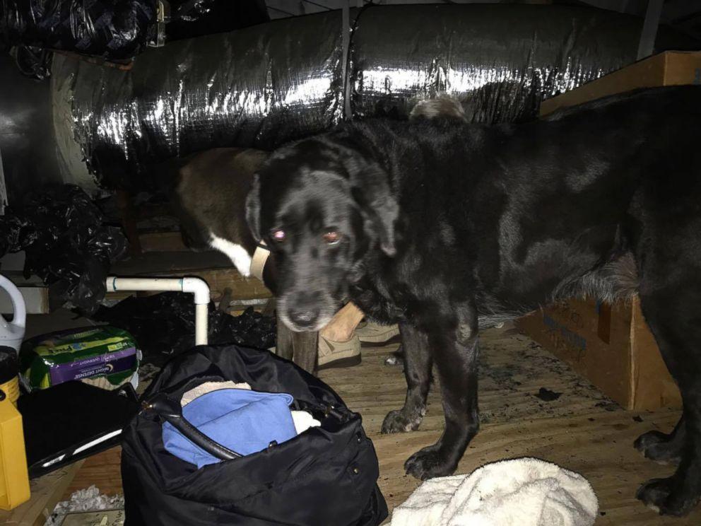 Dog Rescue Groups Harvey