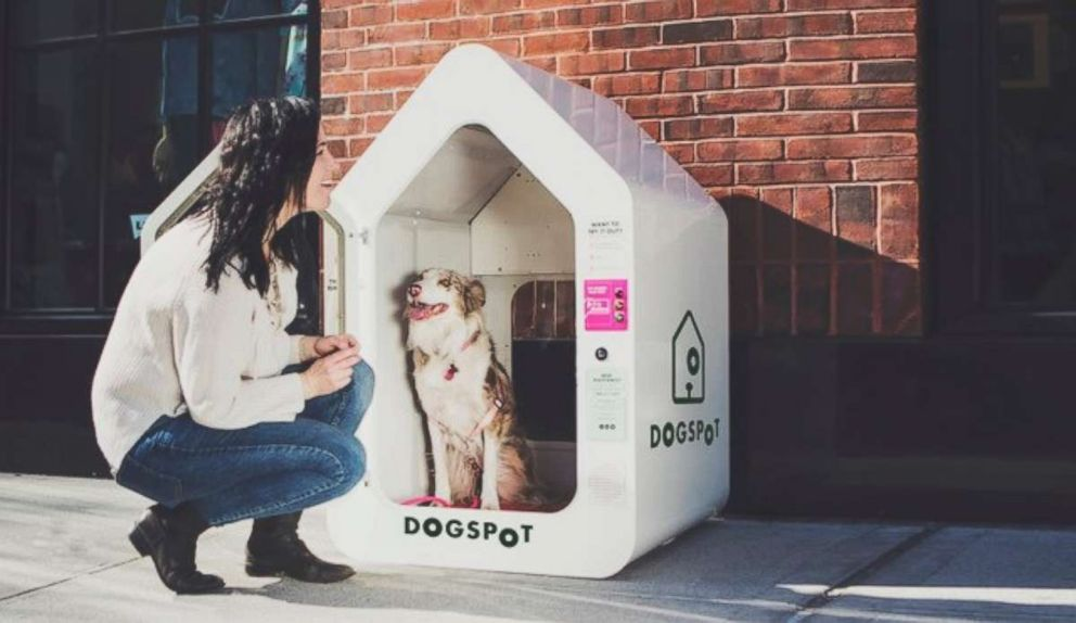 DogSpot was founded by a Brooklyn-based dog owner.