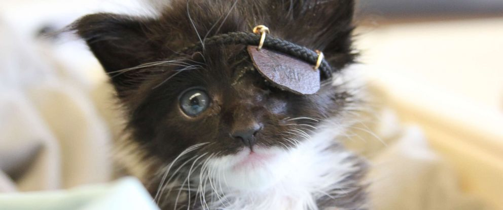 PHOTO: Marine biologist Savannah Anas rescued Scar the kitten and got him a little leather eye patch.