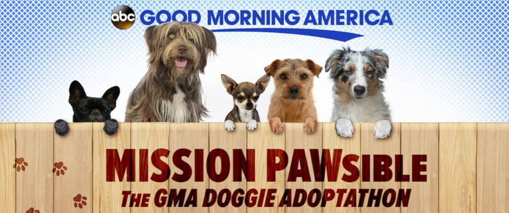 """PHOTO: """"Good Morning America"""" is spotlighting dog adoption all month long to helps pups find homes."""