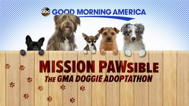Share Your Dog Rescue Story With 'GMA' - ABC News
