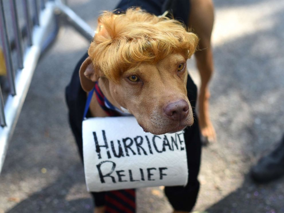 PHOTO: A dog dressed as President Donald Trump is seen during the 27th Annual Tompkins Square Halloween Dog Parade in Tompkins Square Park in New York, Oct. 21, 2017.
