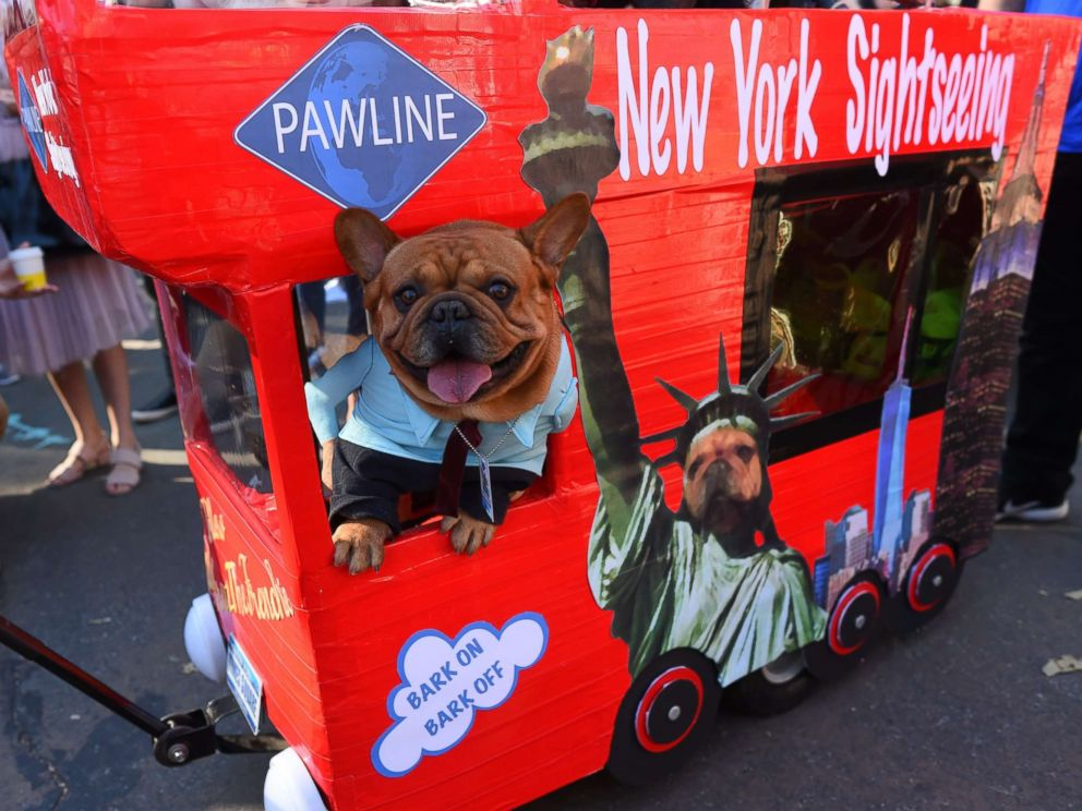 PHOTO: A dog in costume is seen during the 27th Annual Tompkins Square Halloween Dog Parade in Tompkins Square Park in New York, Oct. 21, 2017.
