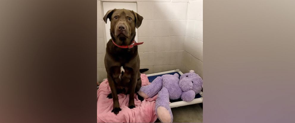 Shelter Investigates Why Dog Tore Up His Beloved Stuffed Animal