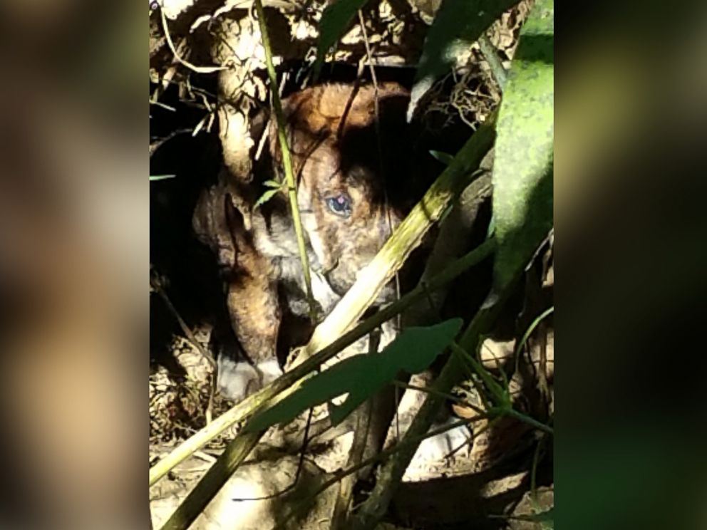 PHOTO: The bachelor party attendees found this puppy, along with 6 others, in a hole dug in the woods.
