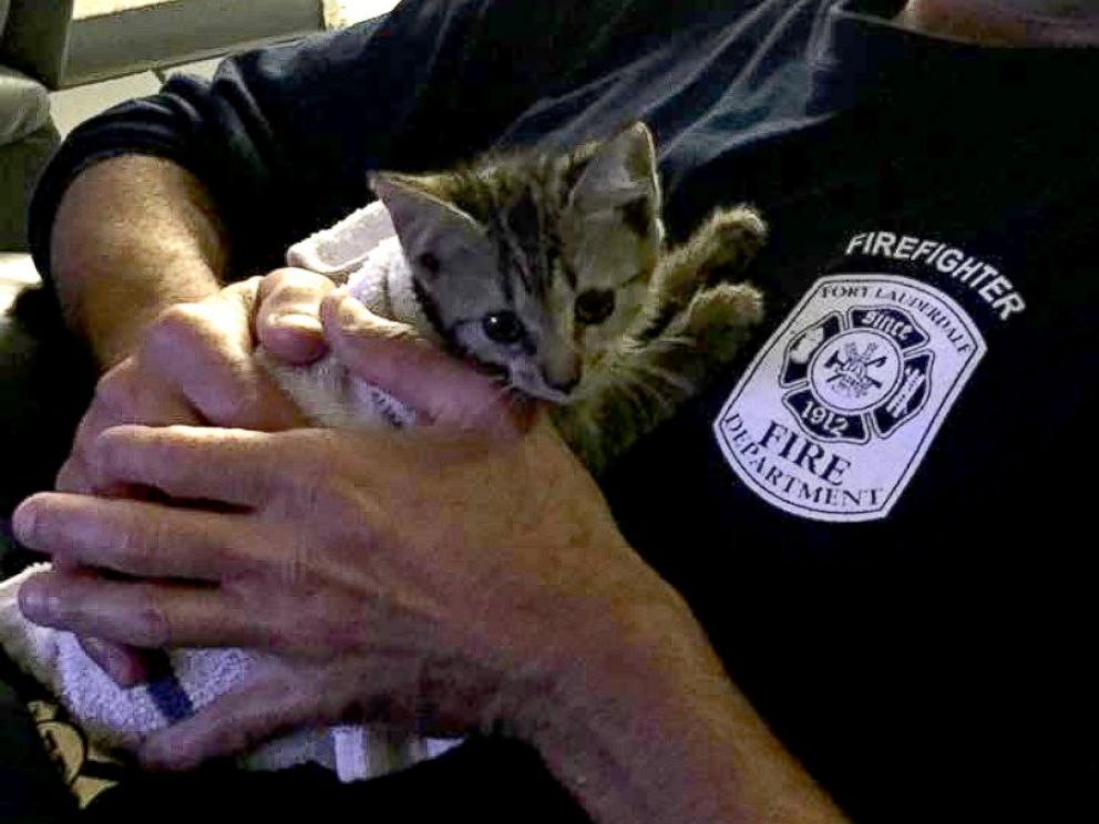 PHOTO: Eric Fillyaw helped rescue a kitten from the engine of a 2016 Porsche Cayenne in the Galleria Mall parking lot in Fort Lauderdale, Florida on April 13, 2017.