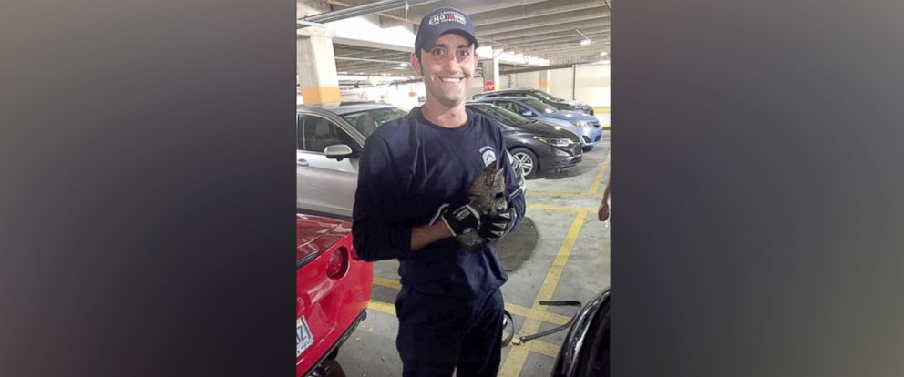 PHOTO: Firefighter Eric Fillyaw helped rescue a kitten from the engine of a 2016 Porsche Cayenne in the Galleria Mall parking lot in Fort Lauderdale, Florida on April 13, 2017.